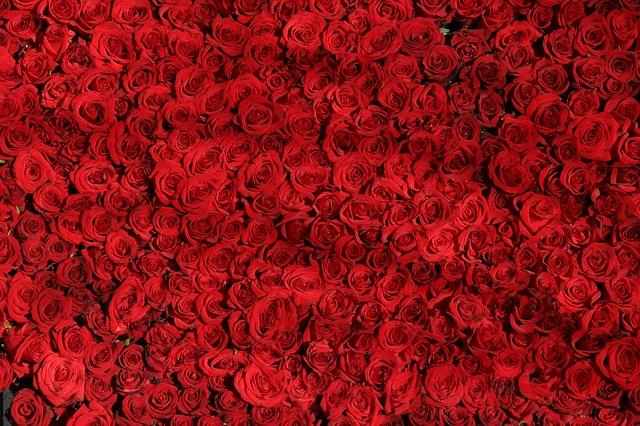 tisíc růží
